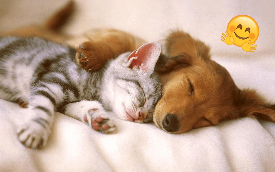 Yeni Evcil Hayvan Alacaklara Tavsiyeler